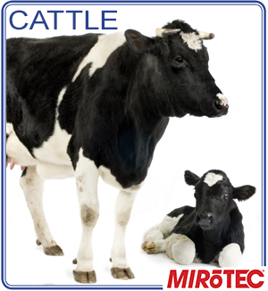 MITOTEC-cattle